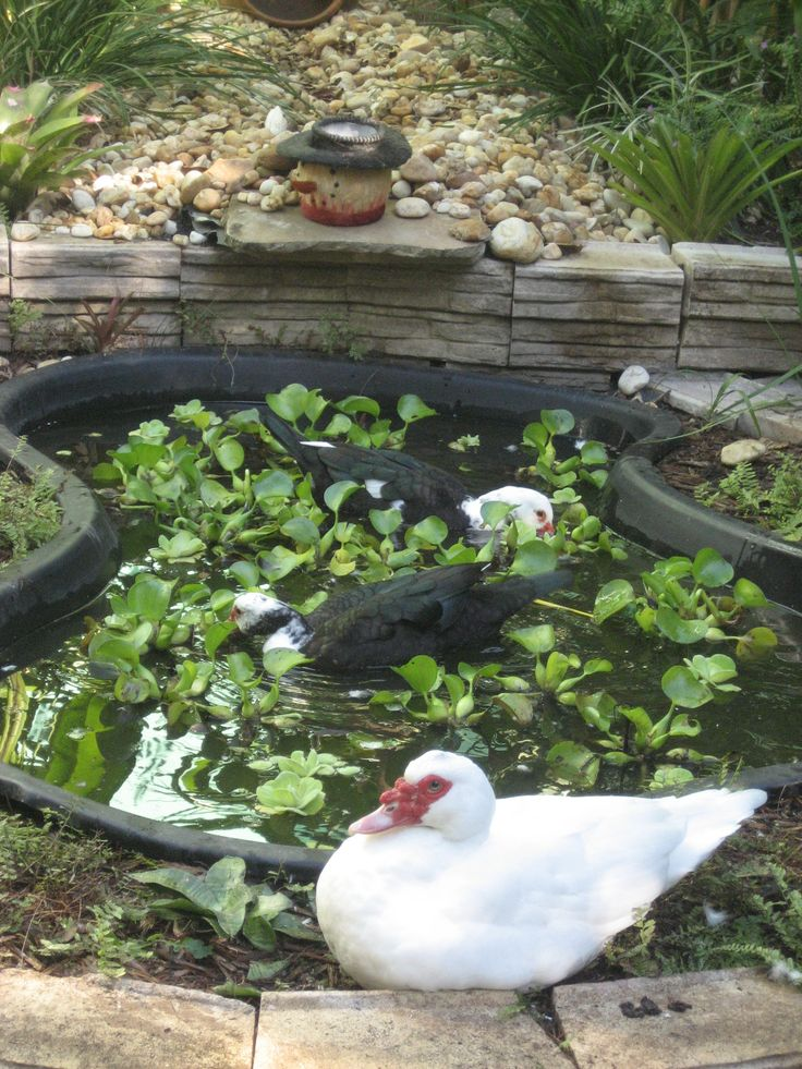 17 best images about duck ponds on pinterest gardens for Outdoor yard ponds