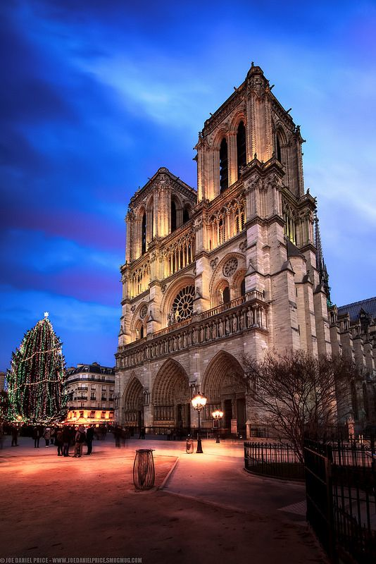 Blue Hour at the Notre Dame, Christmas Tree, Paris, France