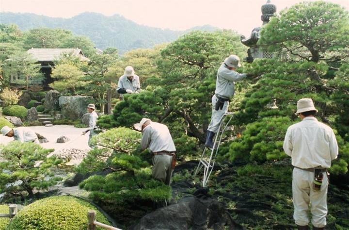 Niwaki working... a lor of work!!! (from Niwaki via FB)