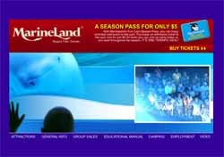 Marineland Niagara Falls - Arctic Cove™ - Whale Encounter - beluga feeding