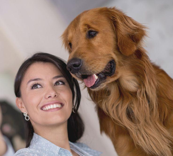 Här redogörs tydligt – och med en stor glimt i ögat – skillnaderna mellan att bara vara hundälskare och att vara hundägare.