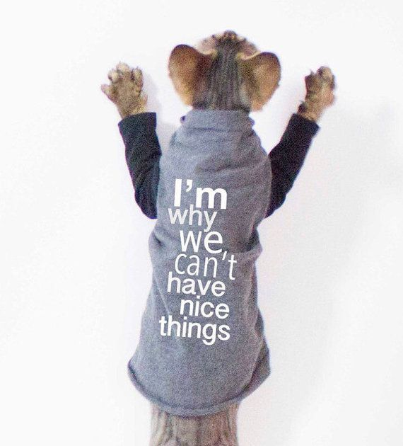 Pet Clothes - Cat shirt I'm why we can't have nice things, Sphynx cat clothes, Cat Sweater, Striped Sleeves, cat clothing, dog clothes