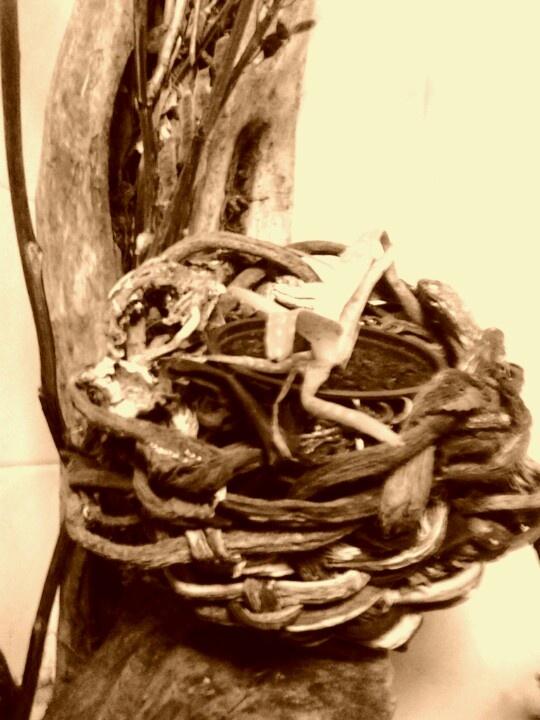 seaweed baskets