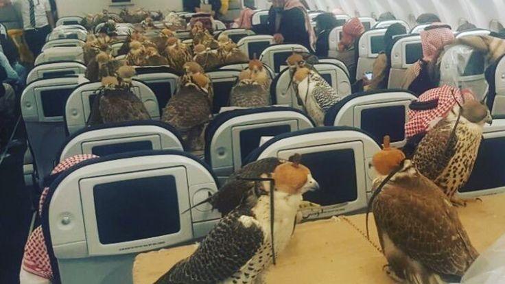 Un homme achète 80 billets d'avion pour ses 80 faucons