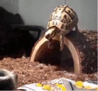 animals turtle