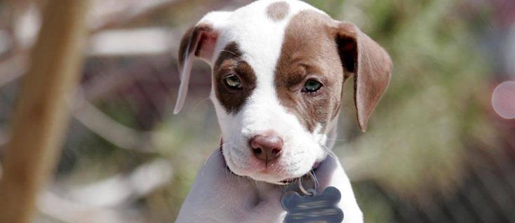 Puppy Obedience Training Tips Obedience training is the essential foundation training that every canine and owner should have. Most owners mistakenly believed they need to have their dogs trained when in fact the owners need theeducation more than the dog do. The most important component in any successful relationship between dog and owner is that …