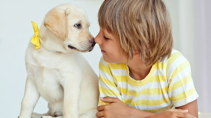 Pin By Christine Deloitte On Favs Best Dogs For Kids Dogs And Kids Best Dog Breeds