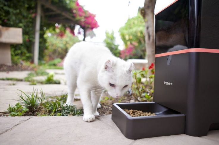 Best Automatic Cat Feeder Review