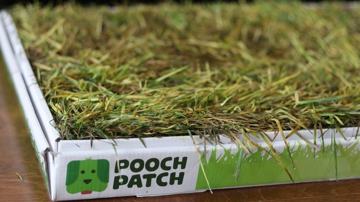 "<a href=""https://www.poochpatch.ca/"">pooch patch 