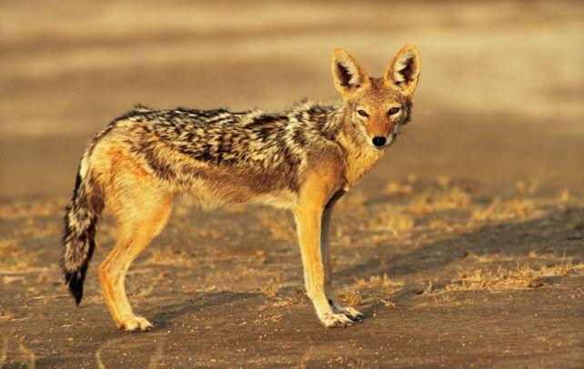 Pin On Wildlife Sanctuaries