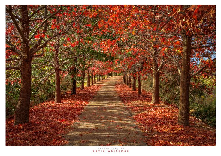 Beechworth Walk by Dave Whiteman - Photo 108126659 - 500px
