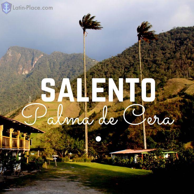 Salento-Quindío, Colombia, Palma de cera.