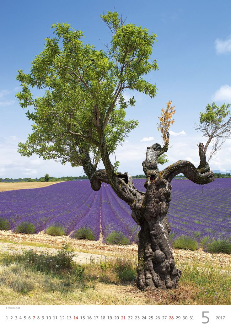 Kalendář Provence 2017