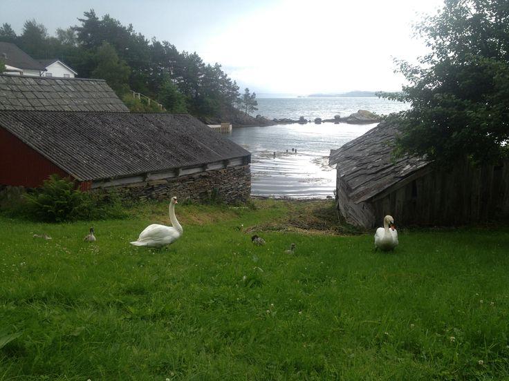 Varaldsøy, Hardanger, juni 2013