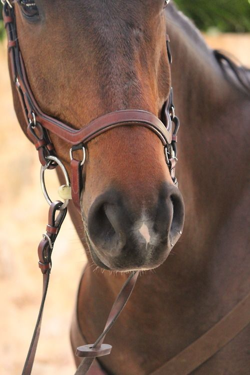 .love this bridle