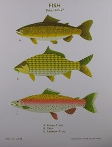 Fish School Chart | Sanders of Oxford