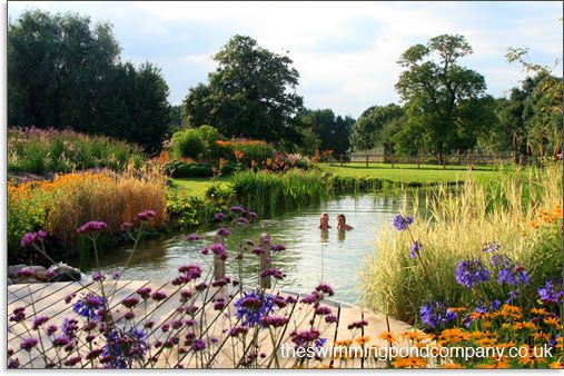 Convert A Swimming Pool Into A Swimming Pond The Swimming Pond Company Garden Glass Planting