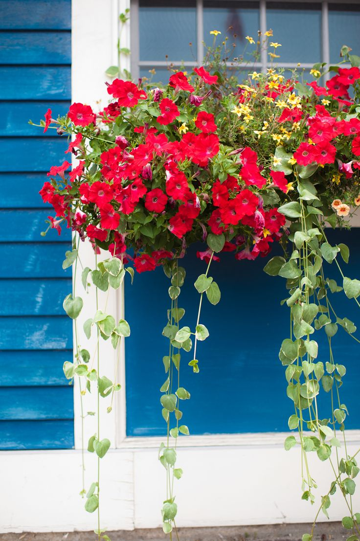Window Flowers in Kennebunkport | photography by http://www.heather-photography.com/
