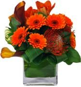Flower Delivery NYC, Best Flowers Seller - Interior Foliage