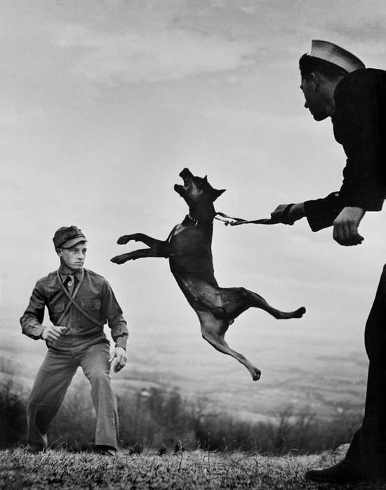 William Eugene Smith, US army dog training center, world war II,1941