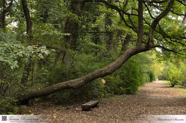 Arboretumul Simeria este o arie protejată de interes național ce corespunde categoriei a IV-a IUCN (rezervație naturală de tip dendrologic și peisagistic), situată în județul Hunedoara, pe teritoriul administrativ al orașului Simeria.
