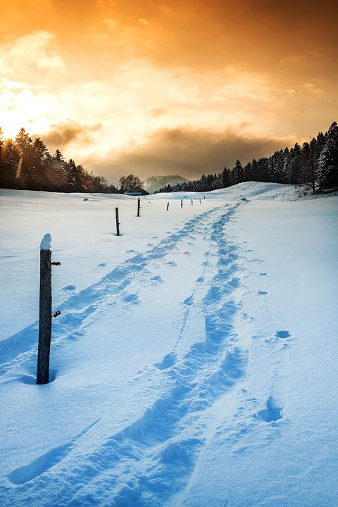 Snow Shoe Tracks - by Christopher Waddell (please view and like/fav)