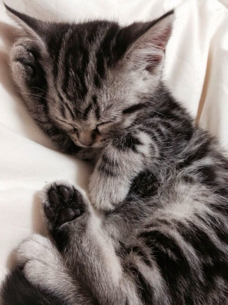 Just 26 Kittens Sleeping Real Weird Cuteness In 2020 Tabby Kitten Silver Tabby Kitten Kittens Cutest