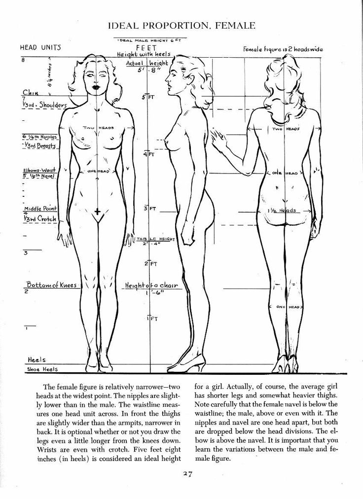 Adult Female Ideal Proportions Character Design