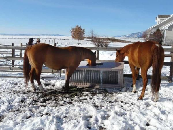 Build a Solar Stock Tank - This reliable livestock waterer will save electricity, and you won't have to chop ice this winter!