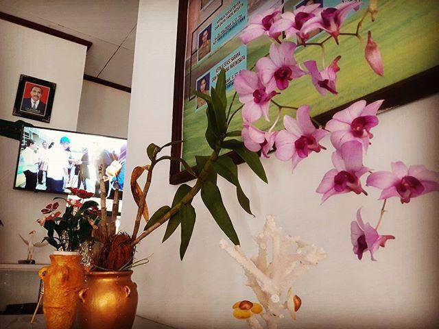 Lelemuku Dinas Pariwisata Kabupaten Mtb Promosi Bunga Anggrek