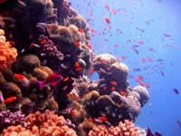The Great Barrier Reef , Australia