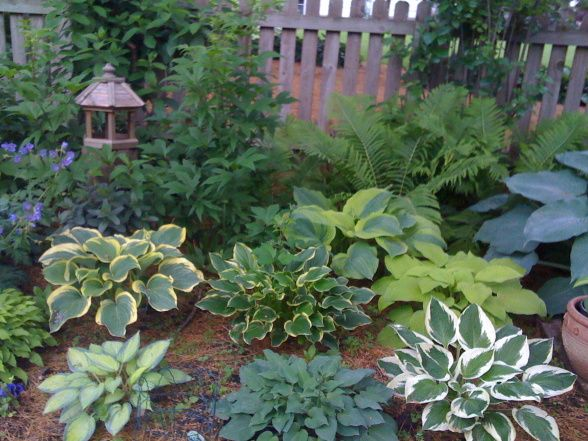 Hostas: June, Liberty, So Sweet, Jewel of the Nile, Blue Umbrellas, August Moon, Patriot, and Blue Cadet. Perenials: Queen of the Prairie, Sedum, and several others.  All of these plants grow in bright but well shaded conditions.  , Gardens Design