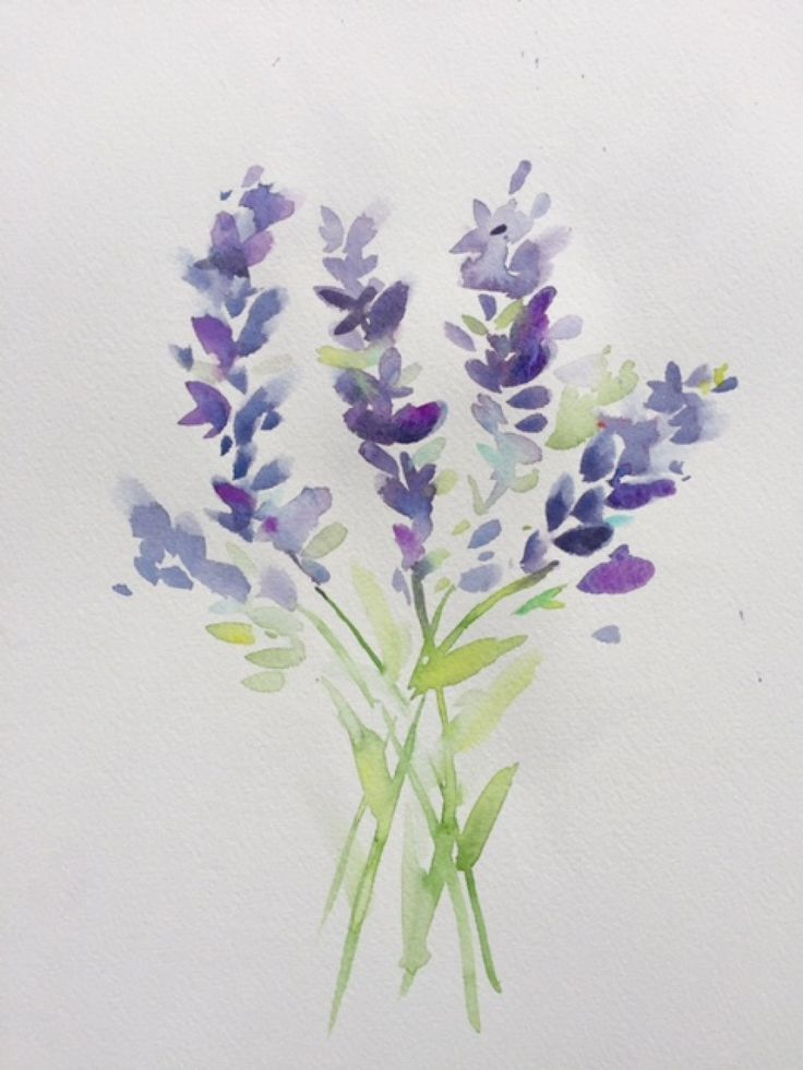 Watercolor Lavender Watercolor Pencil Art Watercolor Art