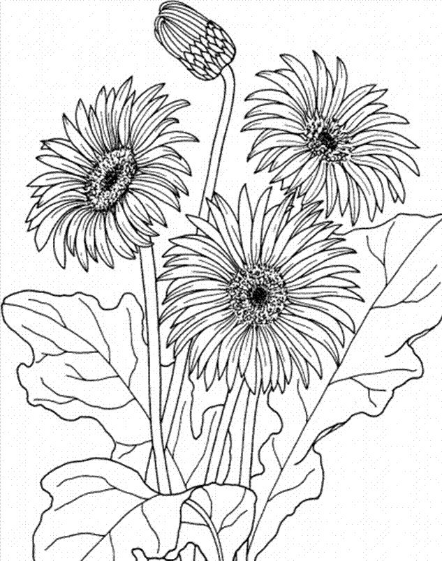 Printable April Spring Flower Coloring Pages Images