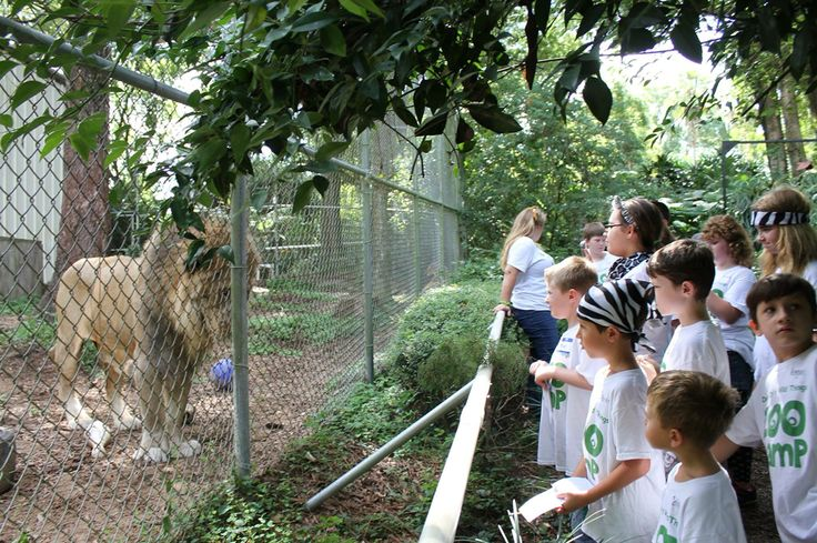 King and Sasha put on a great show for our Zoo Campers