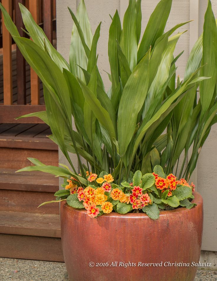 210 best Container gardening images on Pinterest