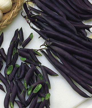Purple String beans!!  I will def. have to get a plant or 2 of this variety next year!