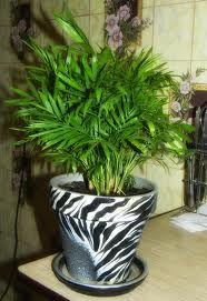 Καθάρισε τον αέρα του σπιτιού σου με φυτά εσωτερικού χώρου...