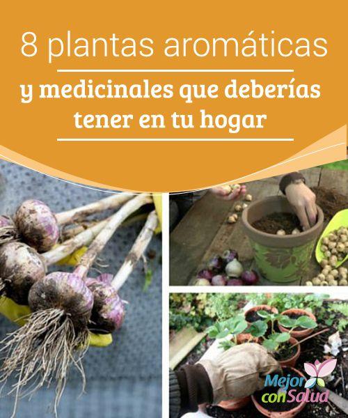 8 plantas arom ticas y medicinales que deber as tener en - Plantas aromaticas en la cocina ...