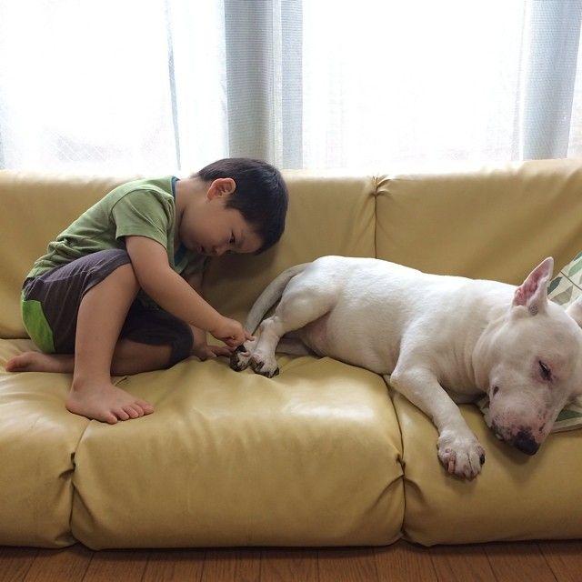 """つんつん… ジャッキー起きひんの〜ん? """"Jackie…"""" """"Non disturbare…"""" #bullterrier #miniaturebullterrier #minibullterrier #minibull #englishbullterrier #bully #dog #cane #ebt #mbt #ブルテリア #ミニチュアブルテリア #犬 #Padgram"""