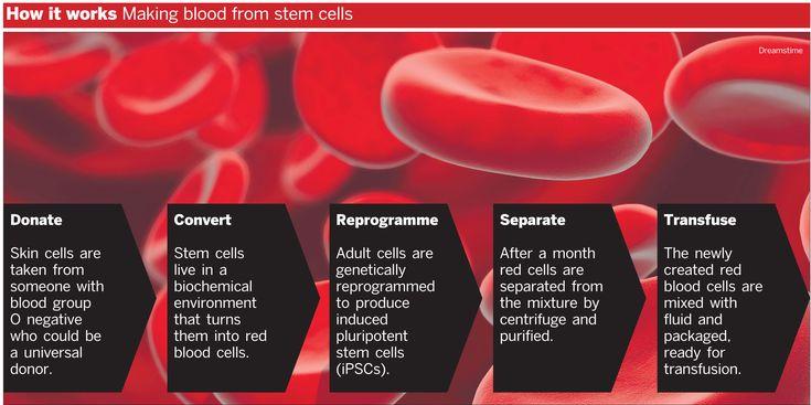 Major steps in creating blood stem cells
