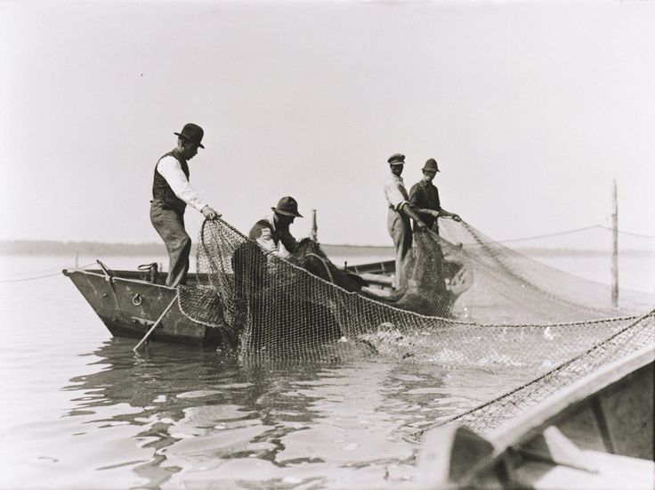 French River PP Fisherman catching Whitefish off the #FrenchRiverDelta (@frenchriverpp) | Twitter