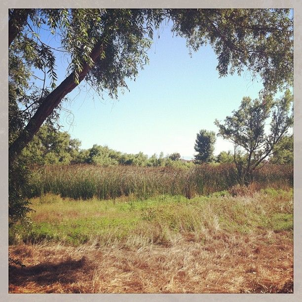 Backyard Nature Preserve : Marsh Preserve And Nature Center in Torrance, CA  Backyard Nature