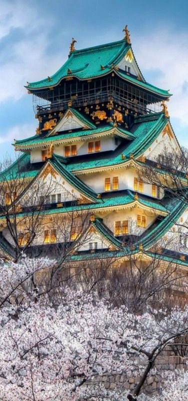 Temple, cherry, blossoms, Japan!