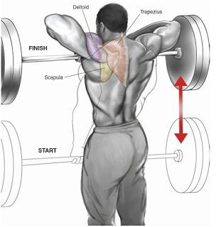 This Pin was discovered by Bodybuilding Man. Discover (and save!) your own Pins on Pinterest. | See more about Shoulder Exercises and Exercise.