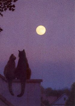 by Quint Buchholz.