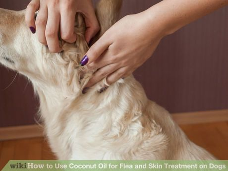Image titled Use Coconut Oil for Flea & Skin Treatment on Dogs Step 4