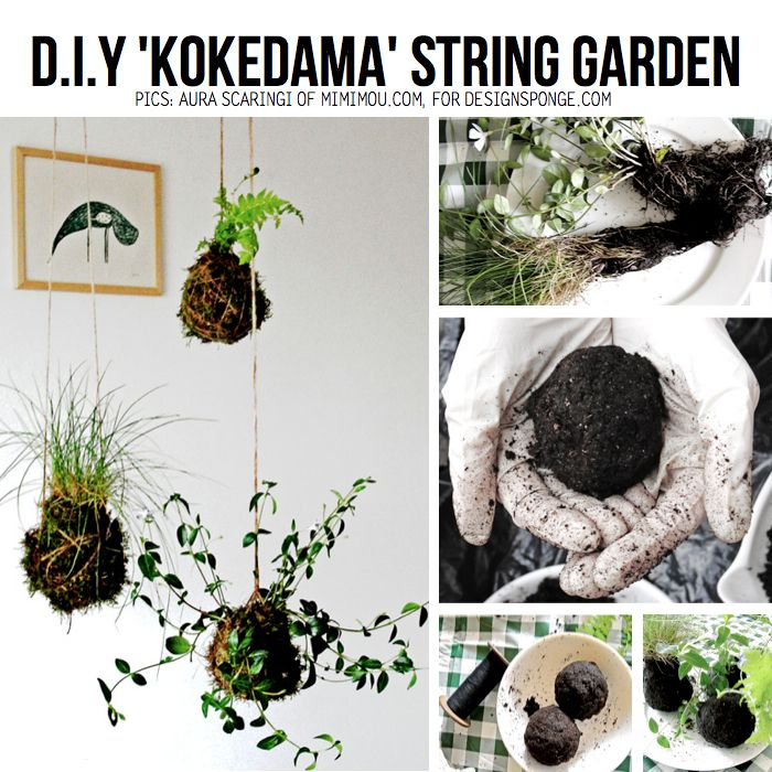 """Check out the awesome tutorial on how to make a hanging """"Kokedama string garden"""", by talented Aura Scaringi of Mimimou for DesignSponge – DIY TUTORIAL HERE"""