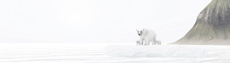 https://flic.kr/p/K1vQdS | bears