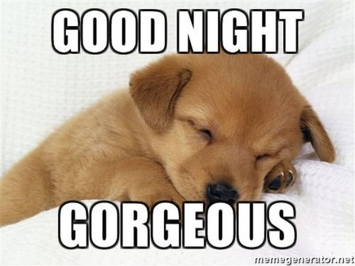 101 Good Night Memes For When You Want Funny Goodnight Wishes Good Night Funny Good Night Meme Good Night Hug